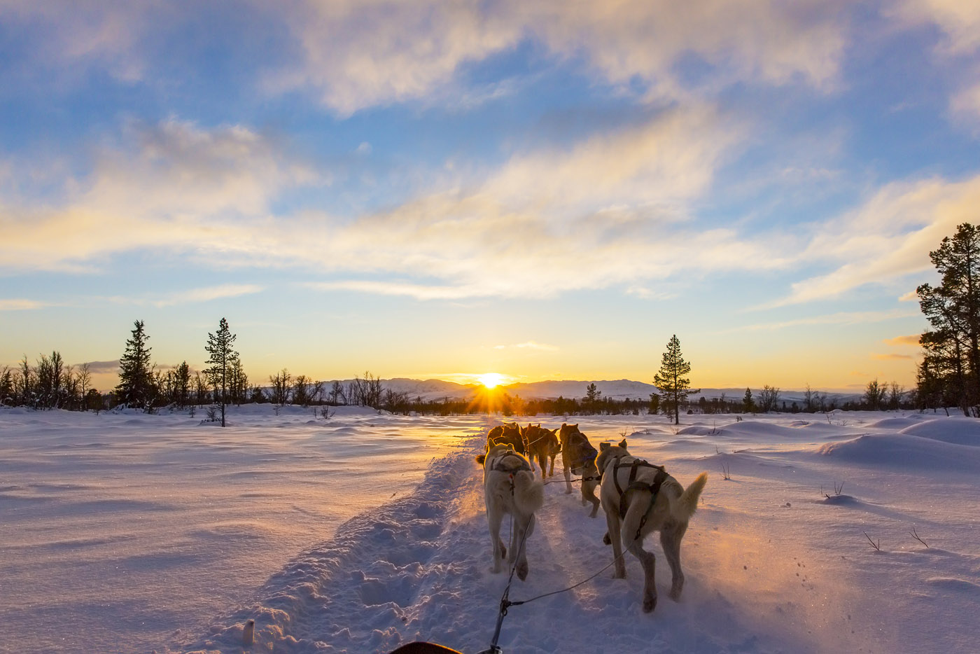Hondenslee tochten met SNP Natuurreizen